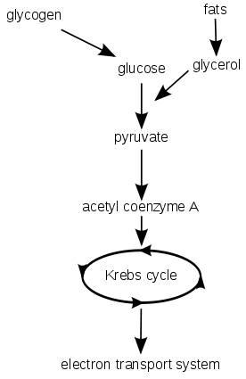 Accounting Flow Diagram Accounting Mind Map Wiring Diagram