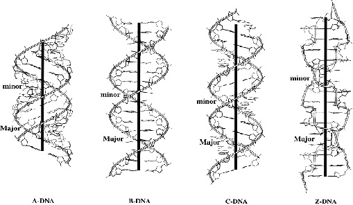 Properties of DNA Assignment Help  Homework Help  Online