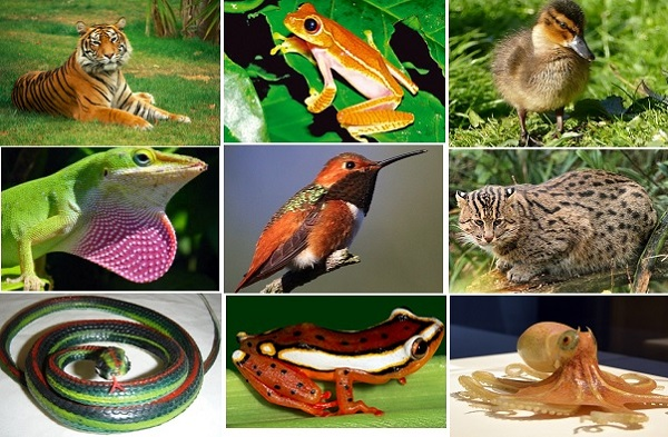 Useful Plants Animals