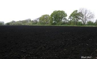 Image result for black soil
