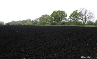 Image result for black soil