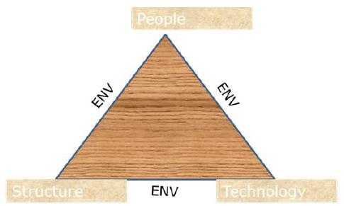 Organizational Behavior Determinants