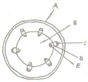 The diagram below represents a transverse section of a