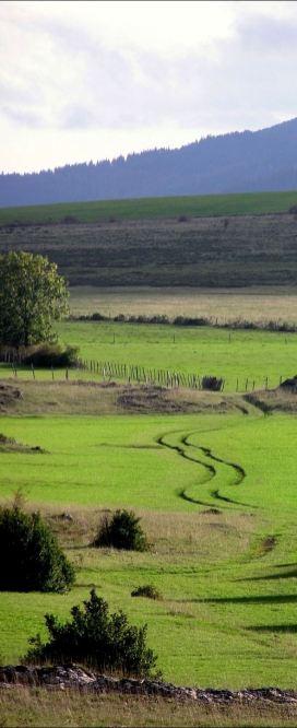 20061021_plaine_crottes_traces_de_pneux_dans_prairie