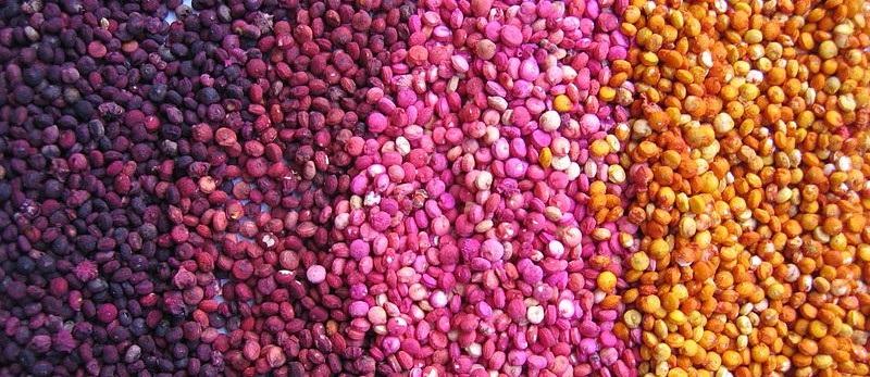 gradazione colori semi di quinoa