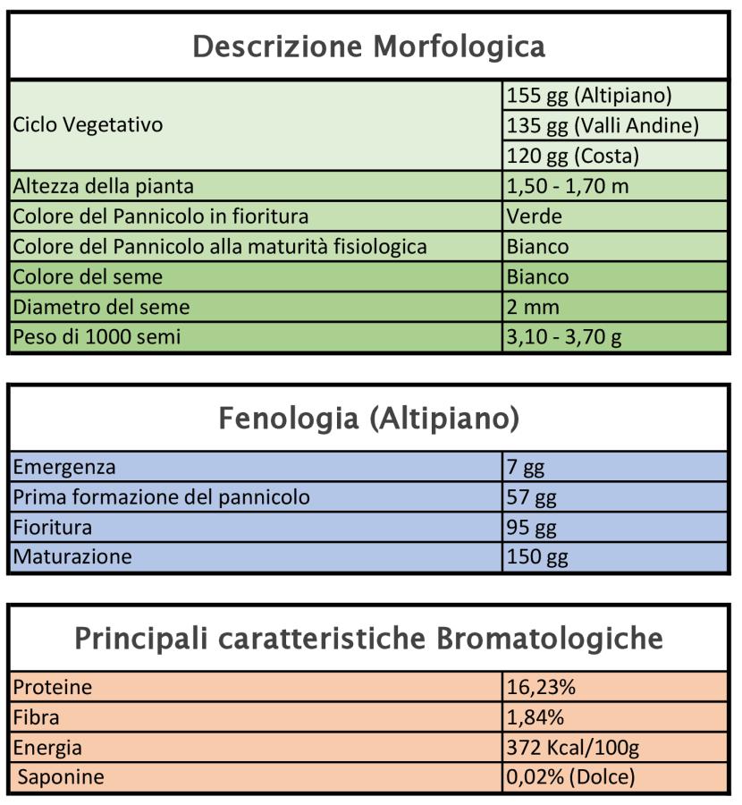 aratteristiche Quinoa varietà Inia Salcedo