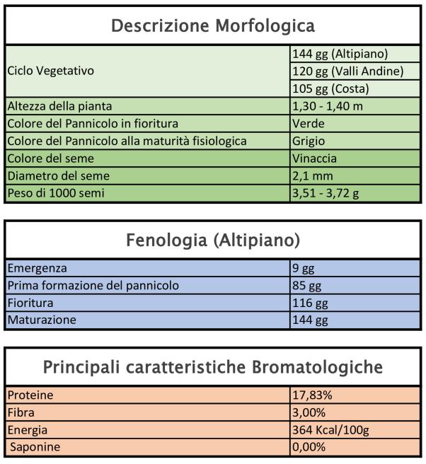 Caratteristiche Quinoa varietà Pasankalla