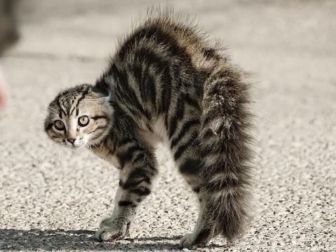 Risultati immagini per gattino che caccia gli artigli