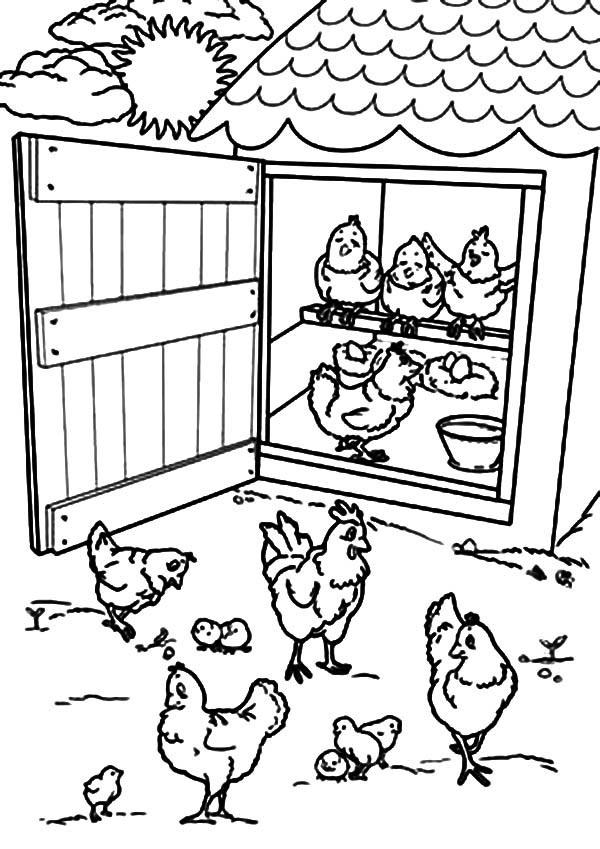 Disegni di gallina, gallo e pulcino da scaricare e