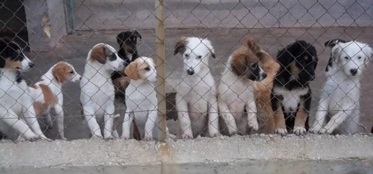 Giù le mani dai canili !