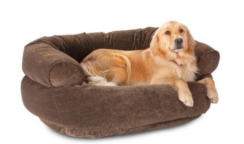 Come aiutare un cane che soffre di artrite  Tutto Zampe