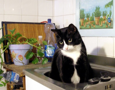 I pericoli in casa per gli animali domestici la cucina  Tutto Zampe