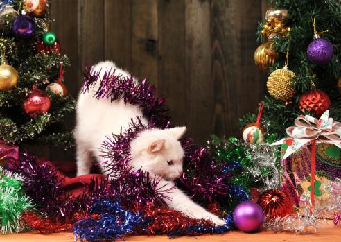 Per entrare nel mood natalizio abbiamo scelto le più belle, e a ciascuna abbiamo associato una frase per fare gli auguri di natale a chi. Le Foto Piu Belle Dei Gatti A Natale Tutto Zampe