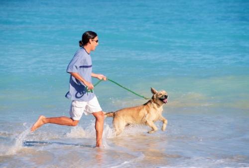 spiaggia per animali in Liguria