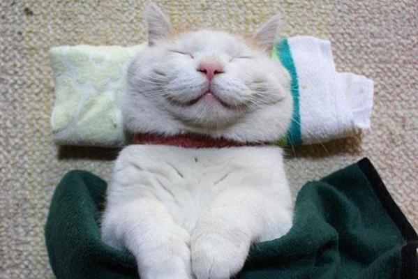 Shironeko il gatto zen  Tutto Zampe