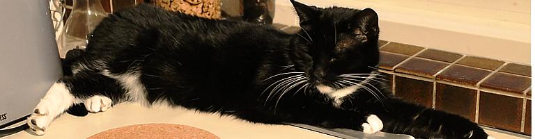 Tuxedo Cat, M.
