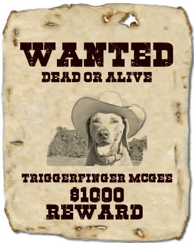 make your own wanted poster free online