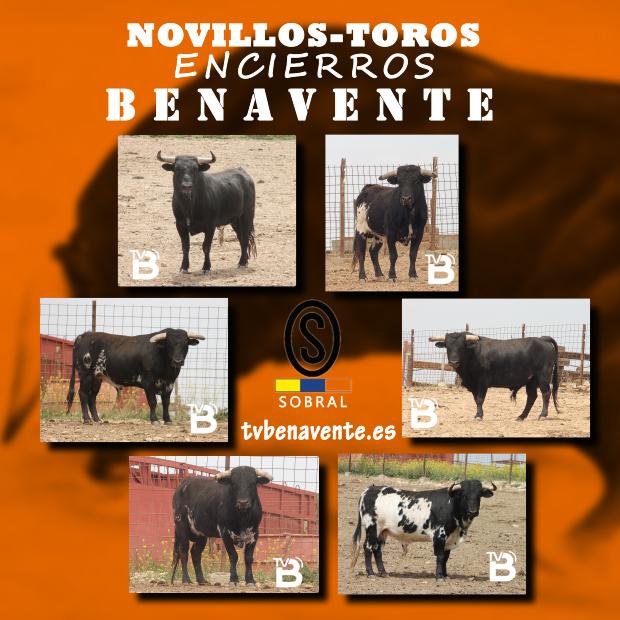NOVILLOS ENCIERROS 2013