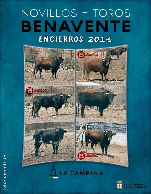 toros novillos encierros toro benavente 2014 - ganaderia la campana