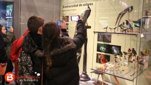 Alumnos fotografiando algunas especies en el Museo