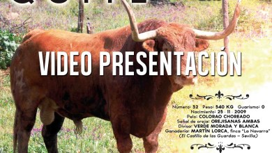 Photo of VIDEO: Presentación de Quite, TORO ENMAROMADO 2015 DE BENAVENTE