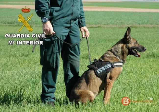 Perro detector de cebos envenenados