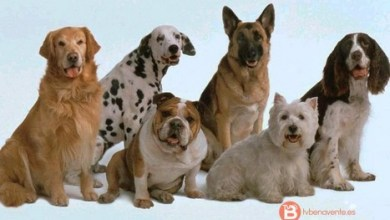 Photo of Hasta el 21 de marzo para actualizar los datos del censo de animales de compañía en Benavente