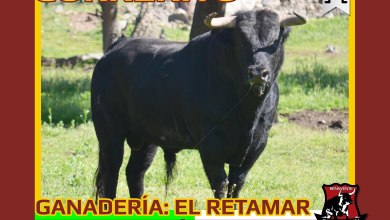 Photo of Toros de los Condes Duques 2016 Charamandanga Benavente
