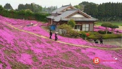 Photo of Planta un enorme jardín de flores para sacar a su mujer de la depresión