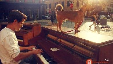 Photo of Dejó su trabajo, se compró un piano y viaja alrededor del mundo tocando música junto a su perro
