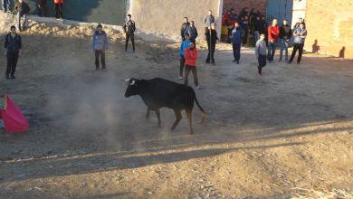 Photo of Los festejos taurinos en la provincia de Zamora reciben 172 denuncias