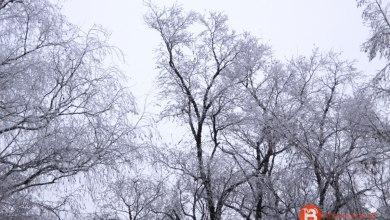 Photo of Sanabria vuelve a registrar la cuarta temperatura más baja de España con -7,1 grados