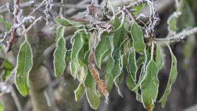 Photo of Sanabria se sitúa en la tercera mínima del país con 2,7 grados bajo cero