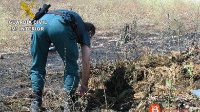 Photo of Investigado como supuesto autor de un delito de incendio forestal en Toro