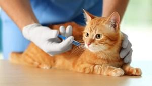 Como funcionam as vacinas de imunização em gatos com Dr. Edgard Brito
