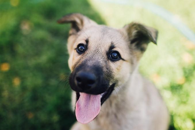 Mitos sobre cachorro vira-lata com Dr. Renato Zanetti