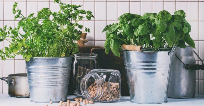 Como fazer suas plantas durarem mais por Letícia Momesso