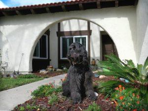 Como evitar que o cachorro cão destrua plantas por Dr. Renato Zanetti