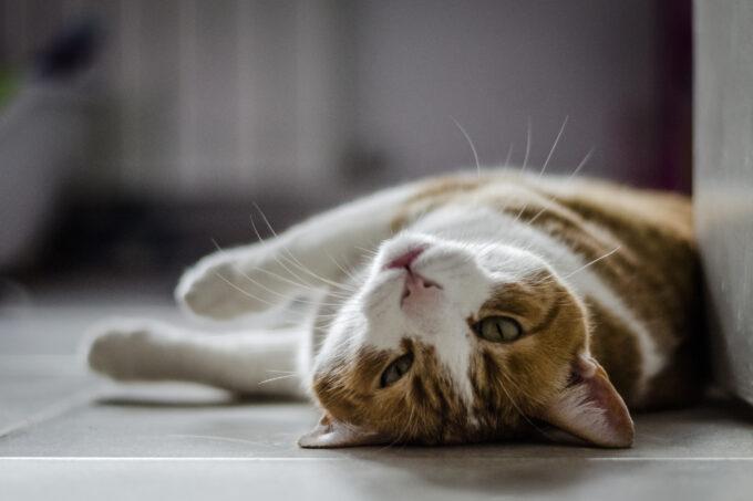 Relação gato x criança por Mari Castro