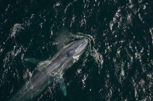 Kingdom of the Blue Whale - National Geographic Channel