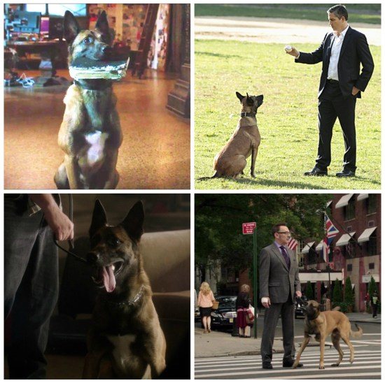 Bear, Reese and Finch - Person of Interest