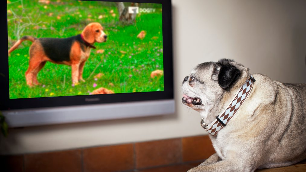 Comcast Debuts OnDemand Streaming for Pooches  TV Insider