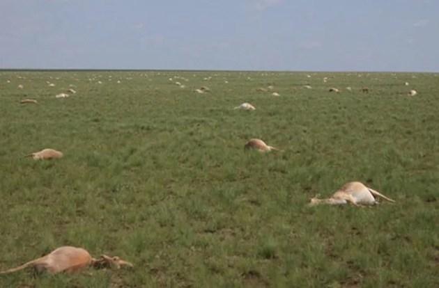 what-killed-60000-antelope-150904
