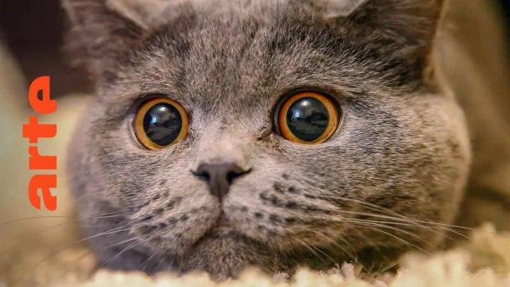 Le chat, ce tueur si mignon