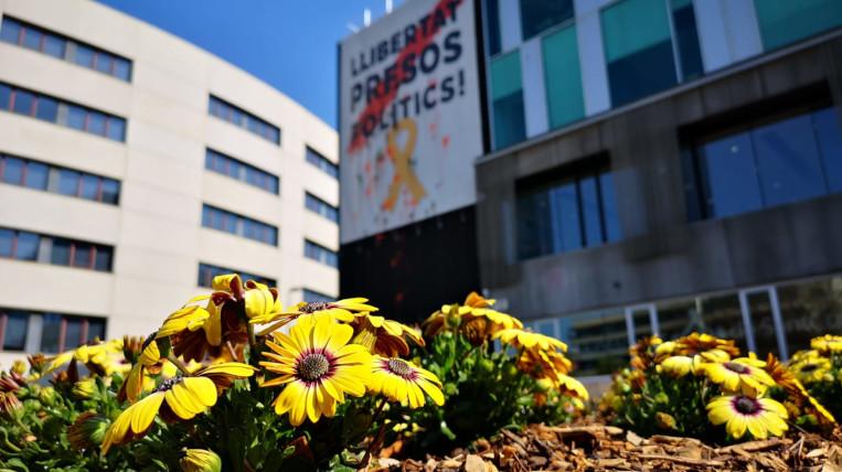 flors-grogues-santcugat