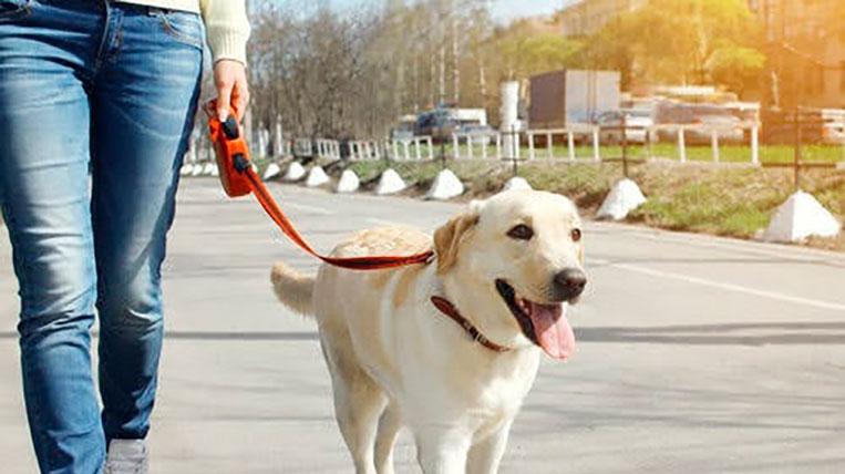passejar-gos-mascotes