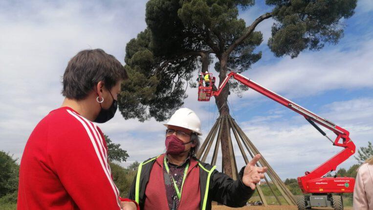 Els tècnics municipals verifiquen el bon estat de salut del Pi d'en Xandri