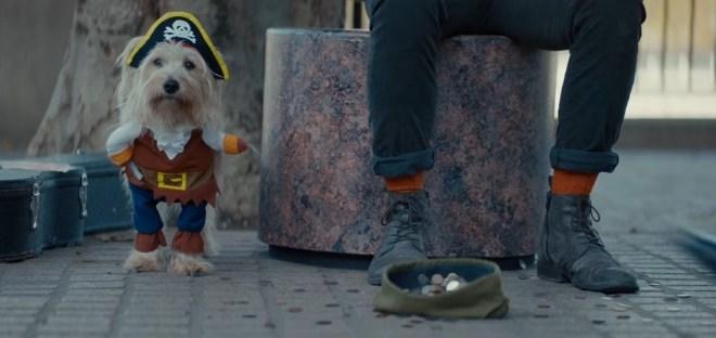 Prime Werbung Hund