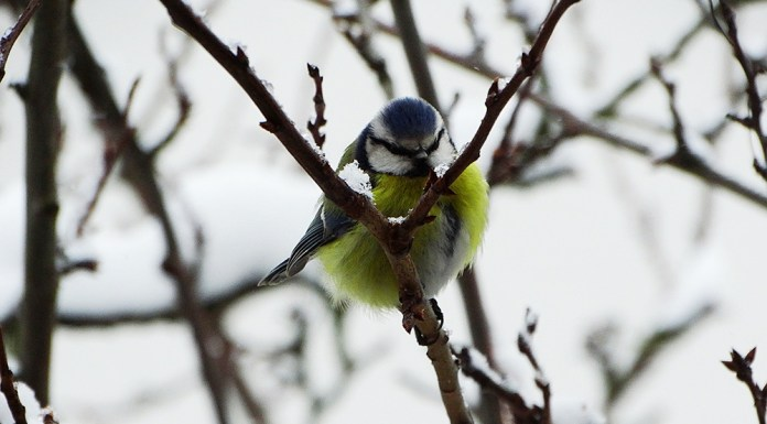 Zima zaatakowała także ptaki, możemy im pomóc.