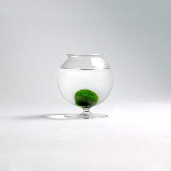 Dóza pro řasokoule - malá koule s podstavcem